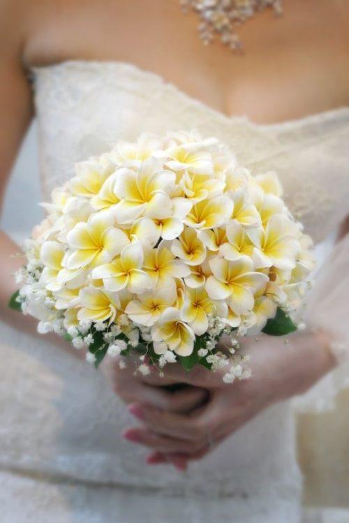 プルメリア:太平洋の島々で愛されるトロピカルフラワー。香りも魅力!