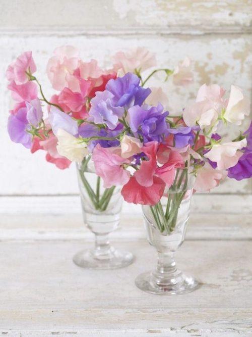 スイートピー:フリルたっぷりの甘い春のお花は、束ねただけで可愛らしい世界観に
