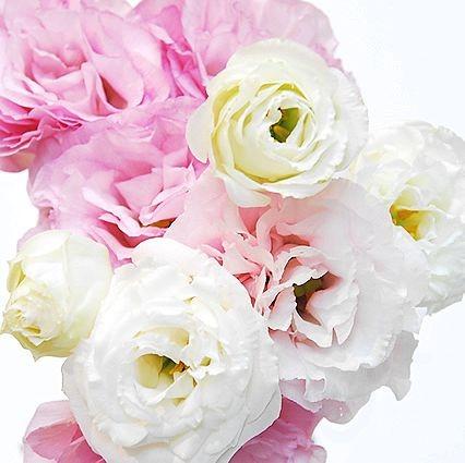 トルコキキョウ:フリルたっぷりの華やかなボリュームが魅力!メインにもサブにもなる頼れるお花